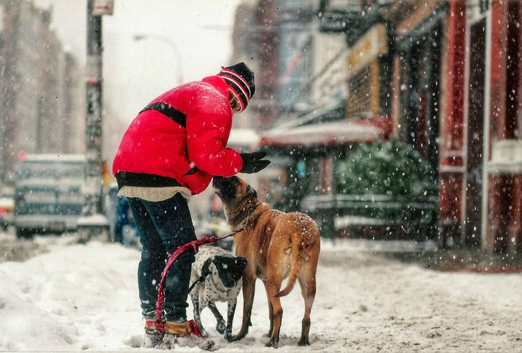 Man With Dogs During Winter