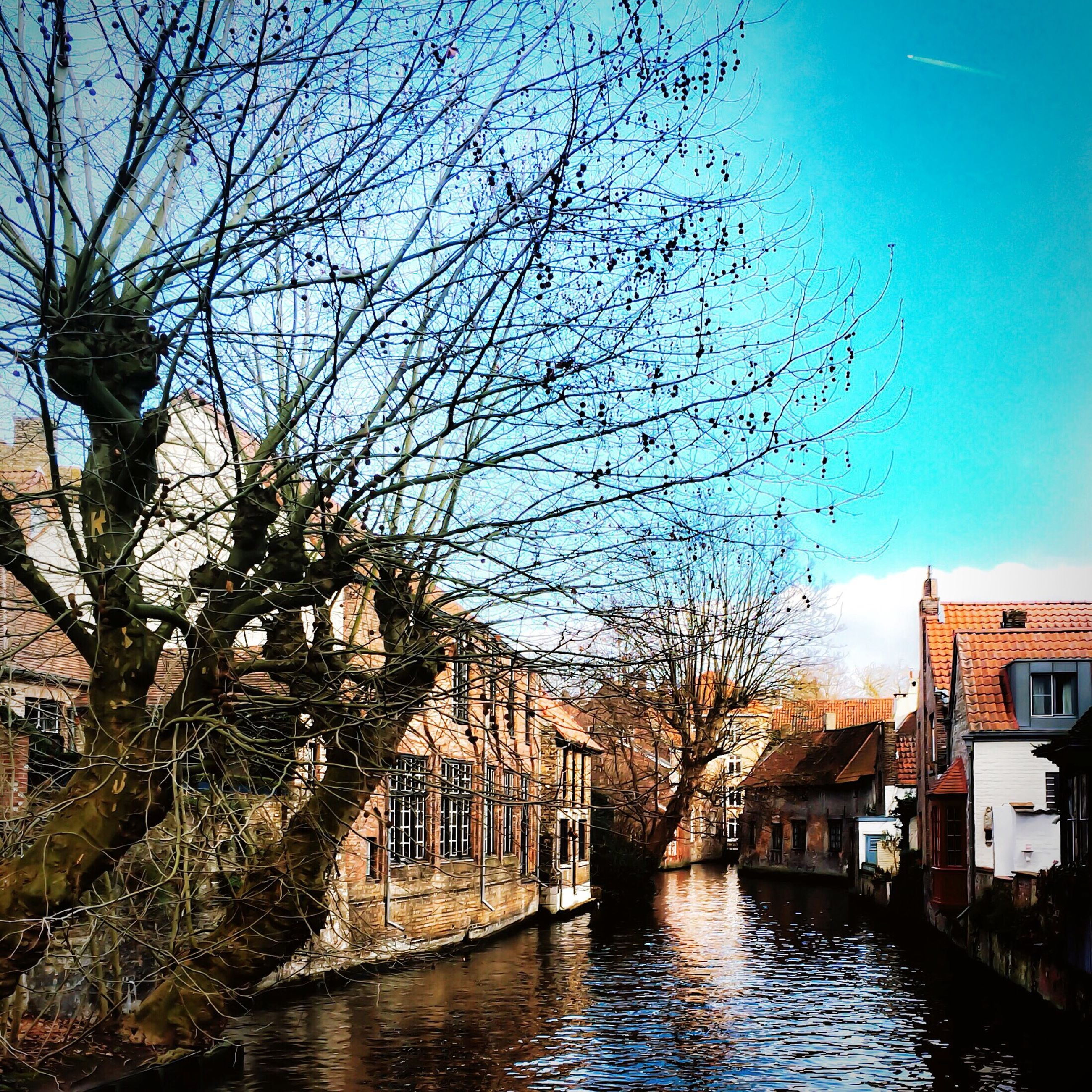 building exterior, architecture, built structure, water, tree, bare tree, waterfront, reflection, canal, residential building, sky, city, branch, river, residential structure, house, building, residential district, no people, day
