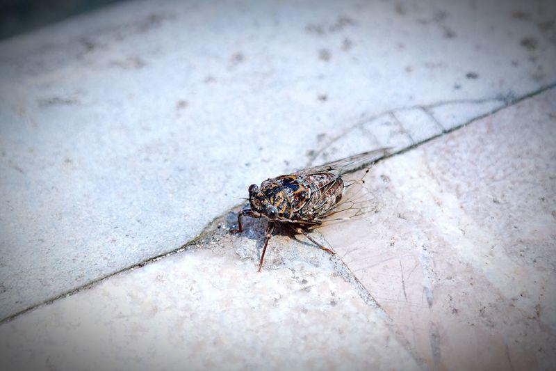 Close-Up Of Cicada