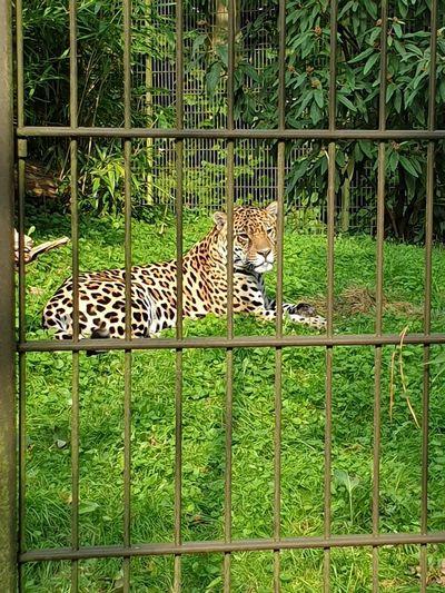 Leopard Bird