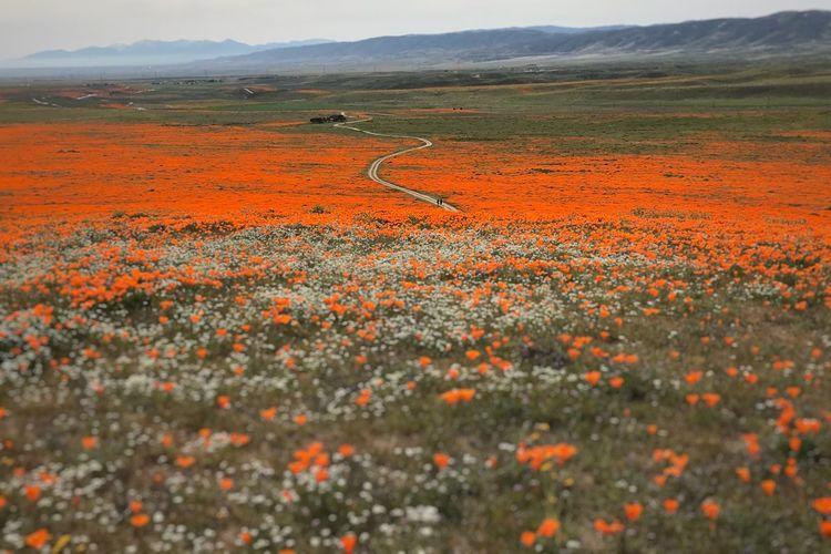 Scenic view of grassy field against orange sky