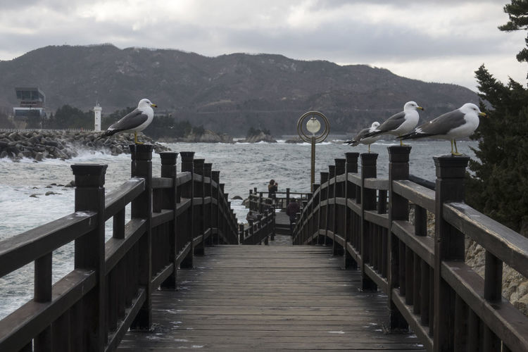 Birds perching on railing of footbridge