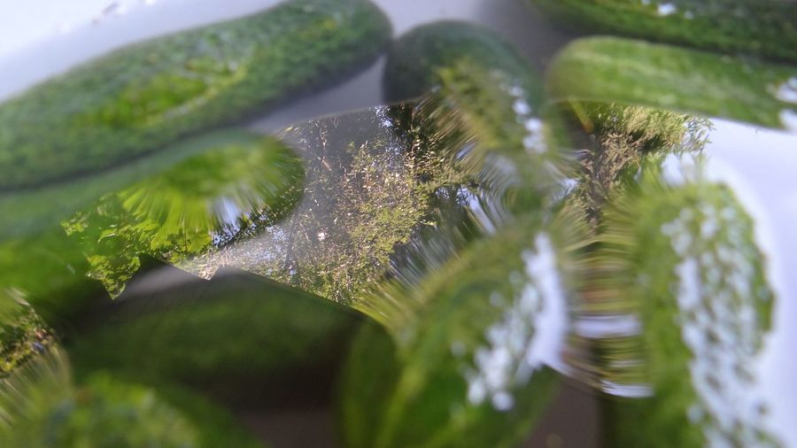 Close-Up Of Plants Against Blurred Background
