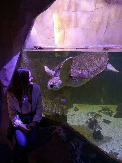 Turtle 🐢 Turtle Love Favorite Animal Fotography Huwaiep20 Weekend Water UnderSea Sea Life Underwater Aquarium Swimming