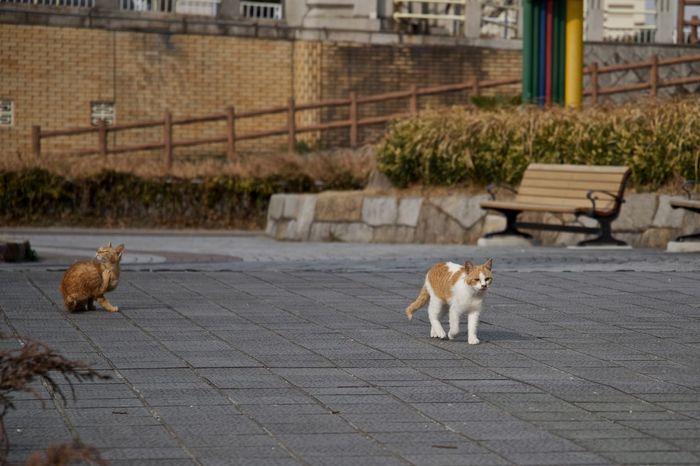 Animal Animal Themes Cat Outdoors Park Stray Cat