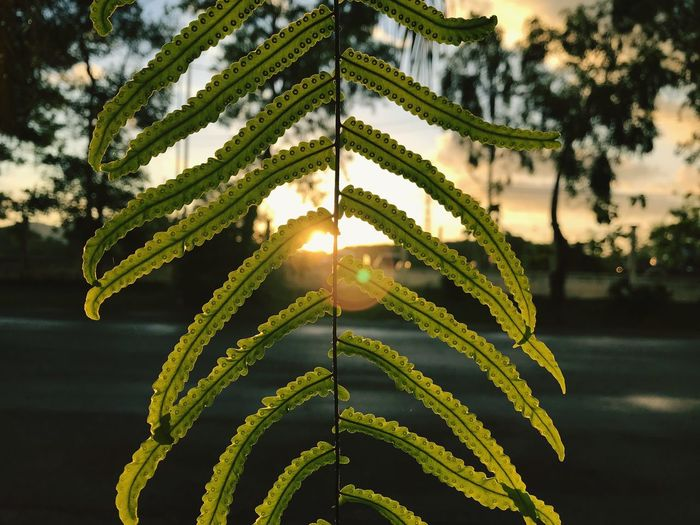 Good morning :) Plant Growth Sunlight Green Color Nature Focus On Foreground Beauty In Nature
