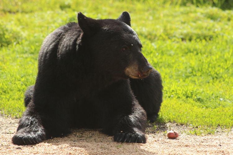 Close-up of black dog sitting on field