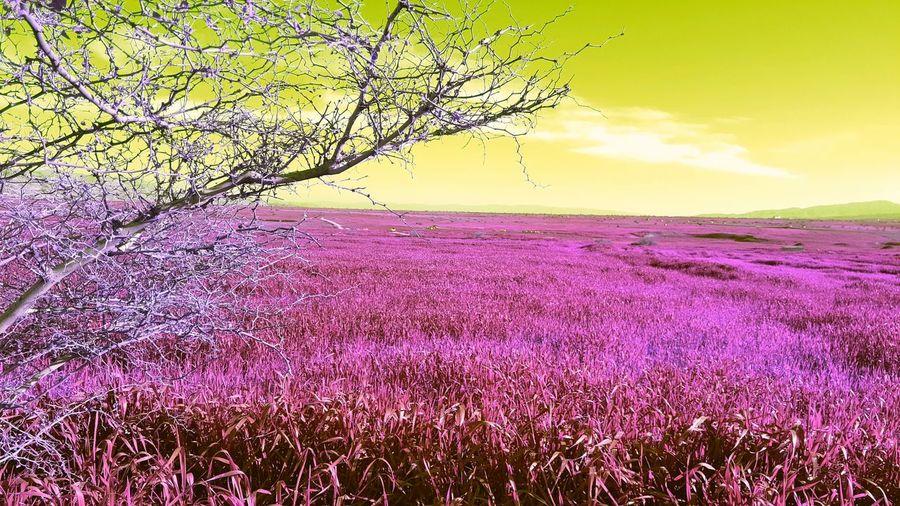 طبیعت ایران طبیعت ایران ایلام طبیعت ایلام منظره Ilam Iran Iran Flowers Taking Photos Fantasy Photography Enjoying Life Fantasy Relaxing Fantasy Edits Nature Nature Photography
