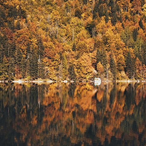 Calm River Against Autumn Trees In Forest