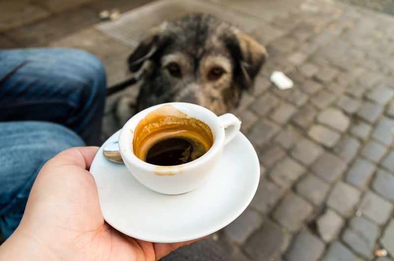 Cropped hand holding espresso cup by dog on footpath