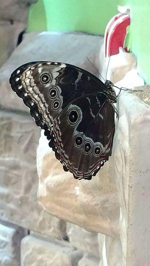 Butterfly Butterflies Butterfly ❤ Black Butterfly Art Is Everywhere