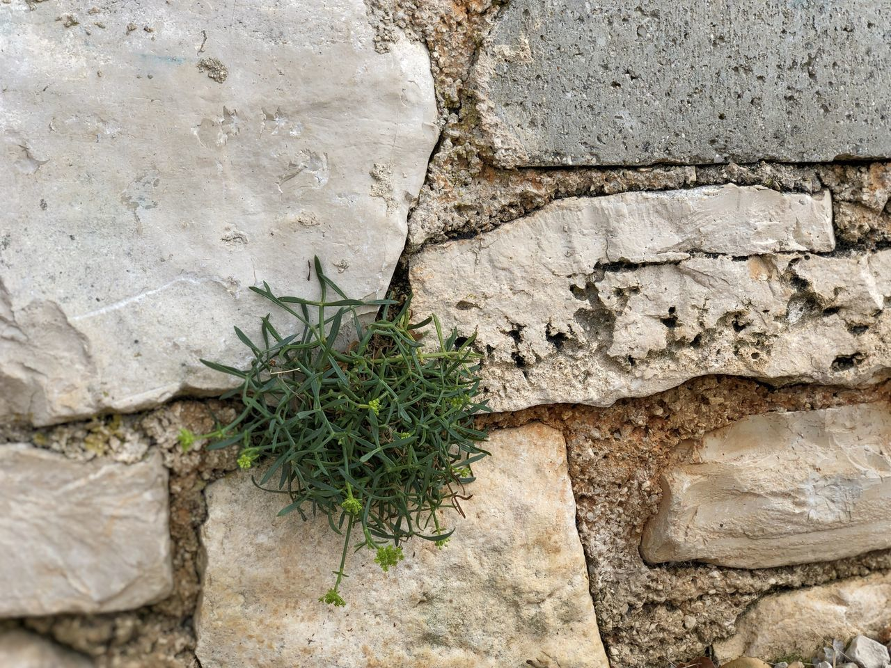 no people, growth, day, solid, wall, textured, plant, wall - building feature, close-up, rock, outdoors, architecture, rock - object, nature, rough, built structure, stone wall, plant part, leaf, stone - object
