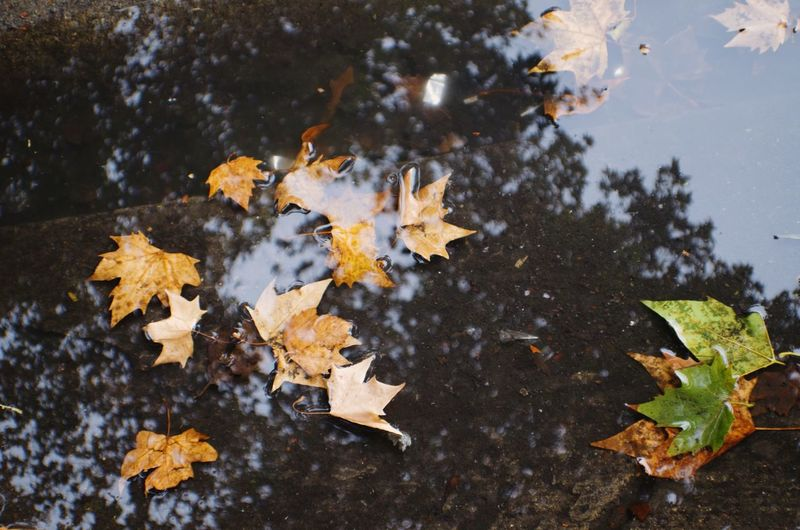 High Angle View Of Leaves In Puddle