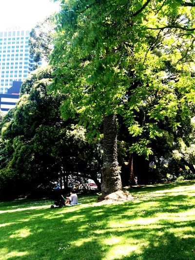 Relaxing under a Tree. Light And Shadow Open Edit Nature Landscape Tree Growth Green Color Nature Day Outdoors City Beauty In Nature