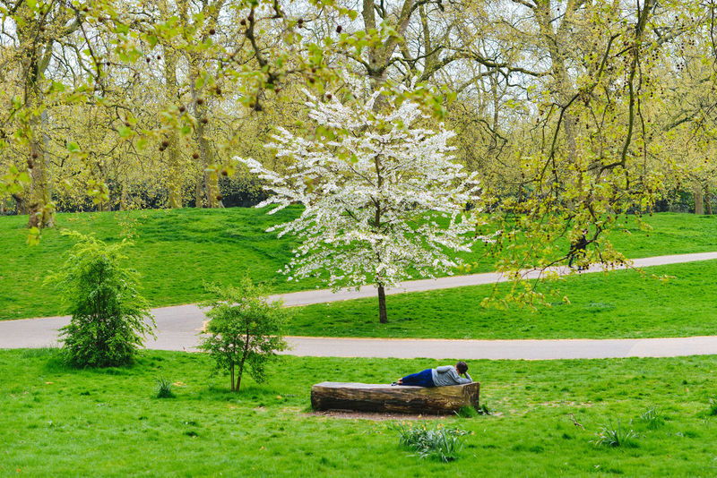 Relaxing Alone Calm Field Grass London Postcode Postcards Relaxing Travel Tree Beauty In Nature Branch Chill Day Garden, Landscape Lawn Lifestyles Nature Outdoors Park People Rest Summer Tranquility Travel Destinations