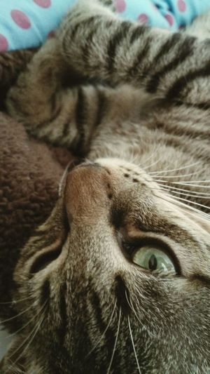 My Year My View Cat Animal Themes One Animal Domestic Cat Pets Close-up Animal Head  Tabby Cat♡ Cat Lovers Mycat Mycapture Mylove Myfirstcat