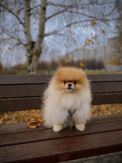Portrait of dog sitting on bench