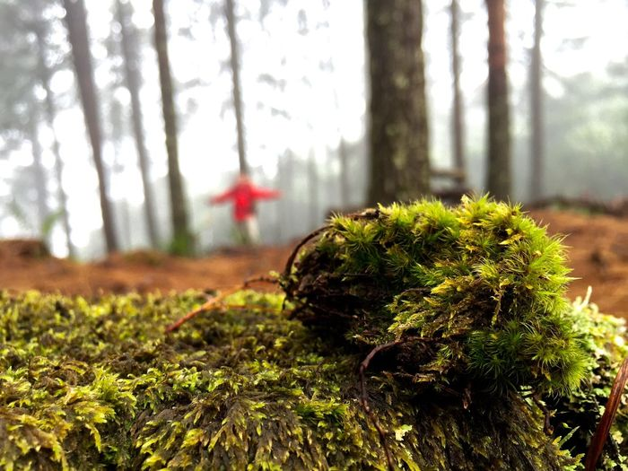Photos from another hike Tree Trunk Growth Focus On Foreground Close-up Forest Green Color Nature Tree Moss Plant Tranquility Growing Non-urban Scene Beauty In Nature Freshness Green Scenics WoodLand Tranquil Scene Fragility Person In Background Selective Focus Fresh On Eyeem  Mossy Mossporn