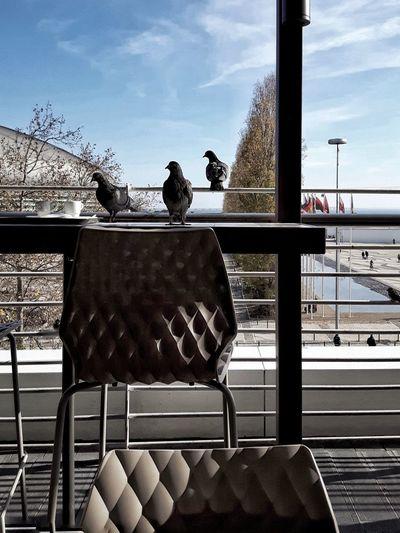 Bird perching against sky