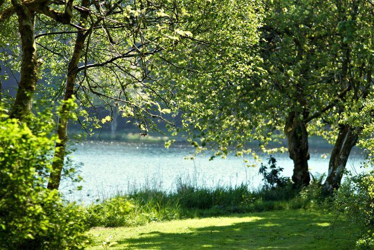 Pitfour lake