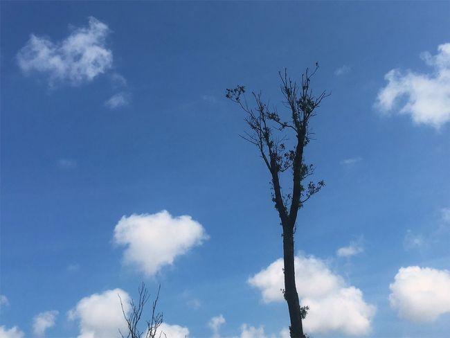 手机摄影 Cloud - Sky Nature Day Sky