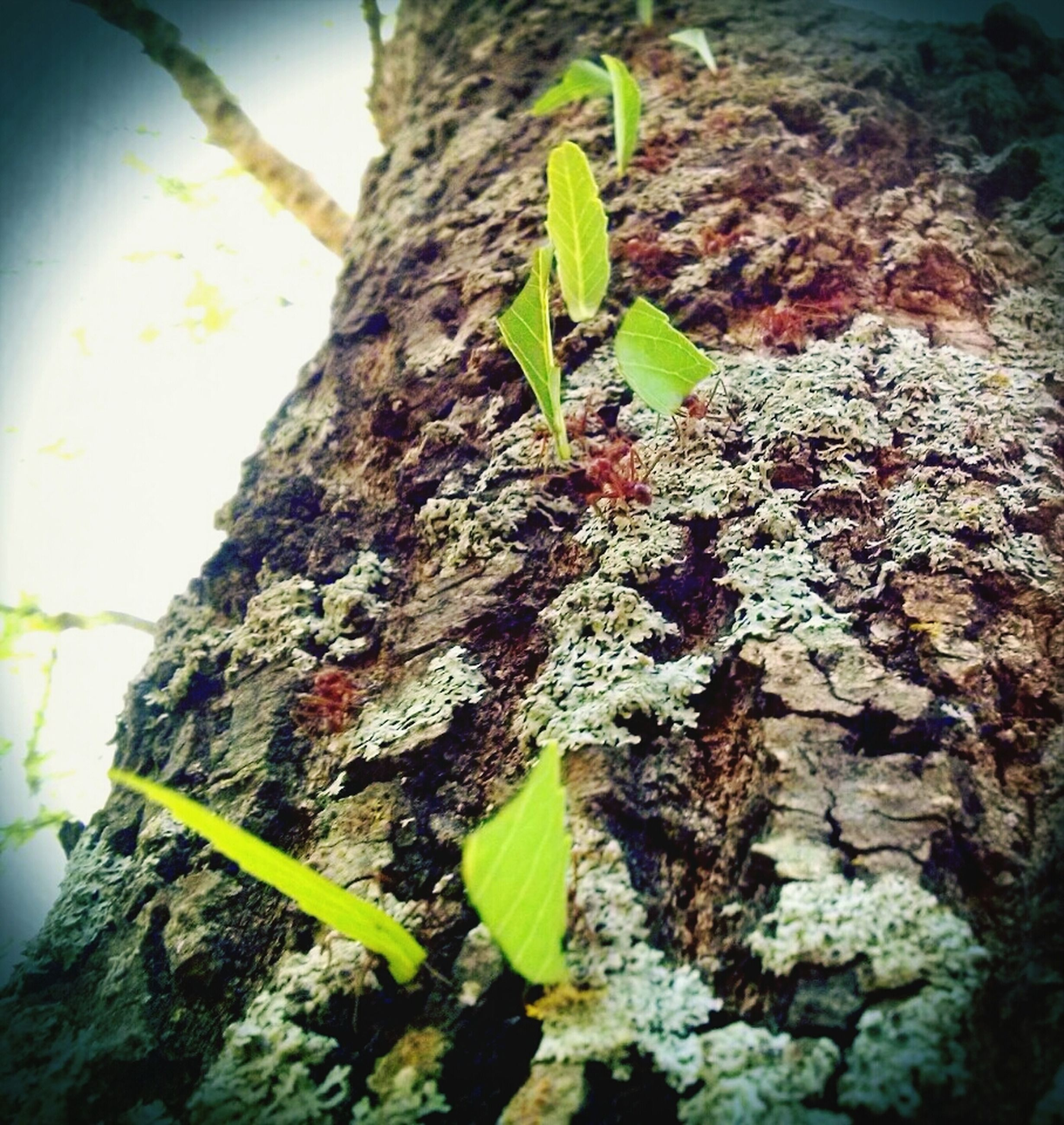 growth, leaf, green color, plant, close-up, nature, growing, tree trunk, textured, focus on foreground, tree, green, day, outdoors, moss, beauty in nature, no people, rock - object, wall - building feature, botany