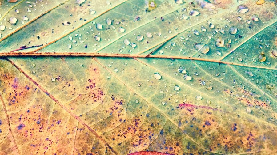 Drups Green Leaves Herfst Fall Autumn