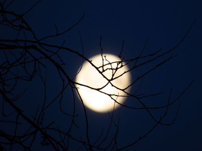 Sky Bare Tree Tree Branch Astronomy Planetary Moon Moonlight Full Moon Moon Space Scenics - Nature Beauty In Nature Tranquility Serenity Serenity Nature_collection Moon Light Moon Shots Full Moon Full Moon Night  Silhouette Spooky Halloween Halloween_Collection Branches Branches And Sky