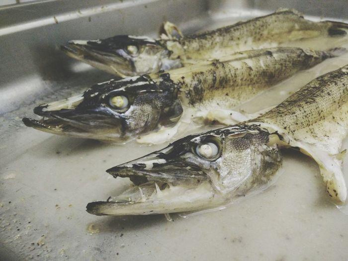 Сегодня на ужин были крокодильчики:) Шутка:) Это рыбка:)