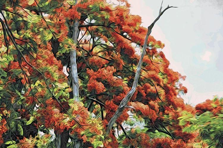 The Minimals (less Edit Juxt Photography) NEM Painterly Nature Tree Trees Jixipix Mokuhanga