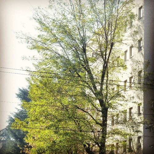 #nature #green #urbangreen #november #light #tree #autumn #fall #milan #igermilan Town November Street Milan Architecture Cities Abstract Perspective Streetphotography Urbangreen Nature Igermilan City Urban Light Green Tree Minimal Building Autumn Fall