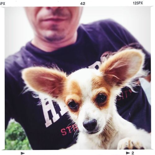 Popeye el perro satelital My Dog Mi Perro