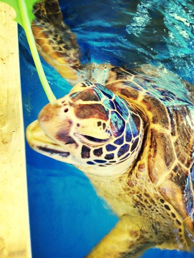 Turtle!!