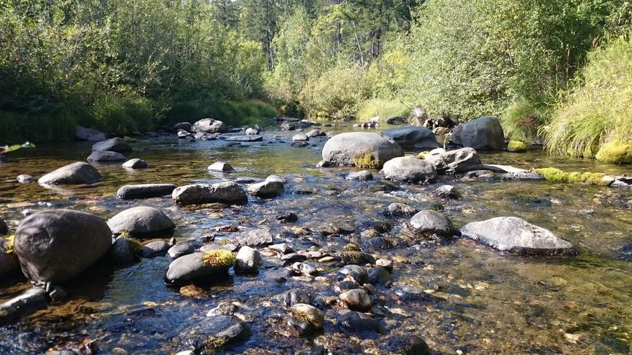 Water Forest Rock - Object Stream Stone - Object Tree Flowing Nature River Scenics Tranquility Tranquil Scene Flowing Water Non-urban Scene Stone Day Beauty In Nature Outdoors No People Surface Level