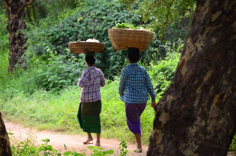 Rear view of women walking with baskets on head