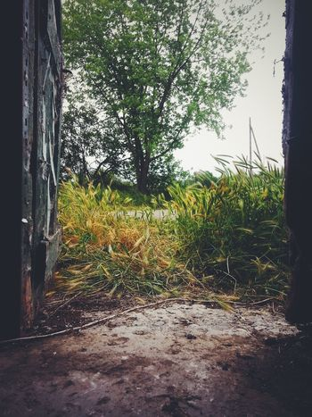 Behind the door Beauty In Nature Day Door Flatland Garden Grass Green Color Growth In Landscape Nature No People Outdoors Outside Plant Scenics Sky Tranquil Scene Tranquility Tree Tree Trunk Wild Wood
