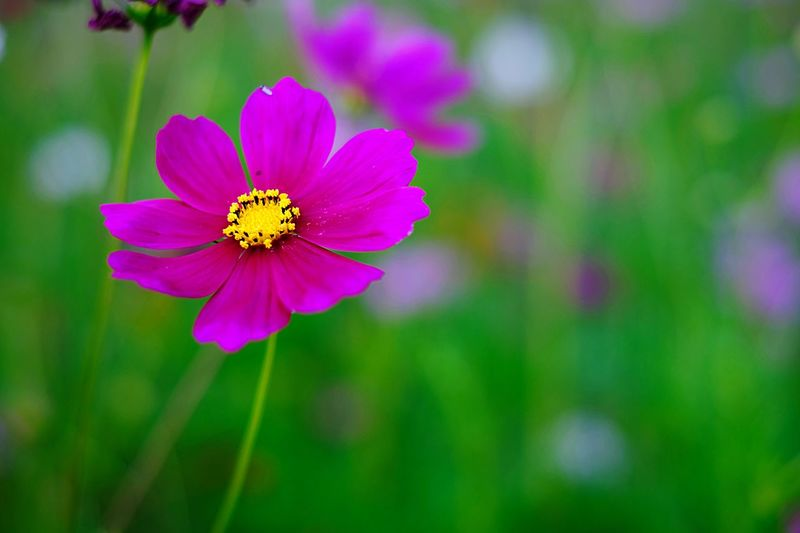 Flower Petal One Animal Insect Animal Themes Fragility Animals In The Wild Flower Head Freshness Nature Beauty In Nature Focus On Foreground Animal Wildlife Outdoors Blooming Growth Pollen Plant No People Day