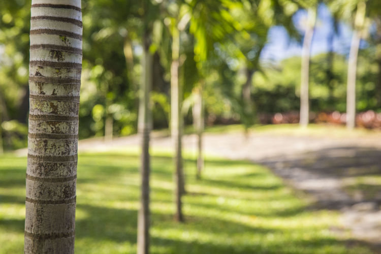 Beauty In Nature Close-up Day Grass Green Color Nature No People Outdoors Palm Ribo Tranquility Tree Tree Trunk Perspectives On Nature