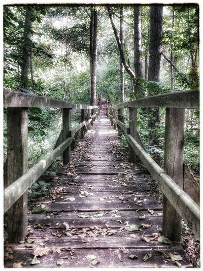 Bridge Most Mostek Forest Las Trees Drzewa Misty Misterious Liscie Leafs Autumn Jesień