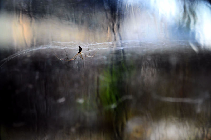 Spider on guard One Animal Animal Themes Spider Web Selective Focus Nature Invertebrate Reflection Spider Water Indoors  Day Glare Sunlight Textured  Backgrounds