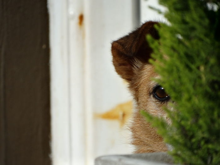 One Animal Animal Themes Animal Wildlife Animals In The Wild Focus On Foreground Pets Close-up No People Day Domestic Animals Indoors  Nature Mammal Portrait