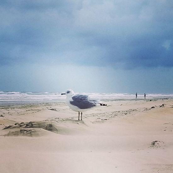 Survivor Bird