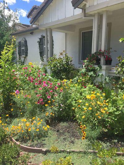Butterfly garden in Pittsburg CA