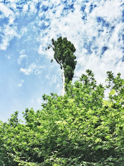 Tree Sky Alone Nice Day Nature Calm & Cool