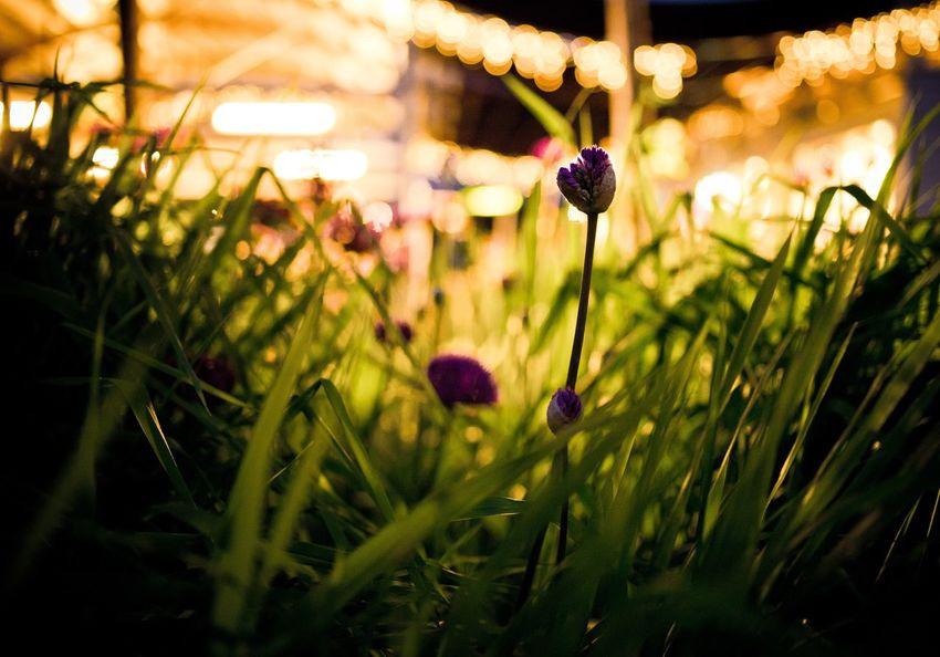 The Great Outdoors - 2016 EyeEm Awards Flowers Flower Bokeh Connected With Nature EyeEm Best Shots Check This Out