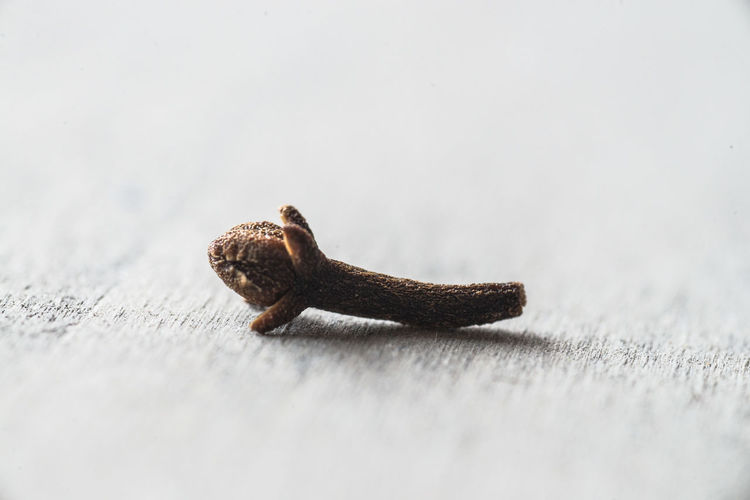 Close-up of clove on table
