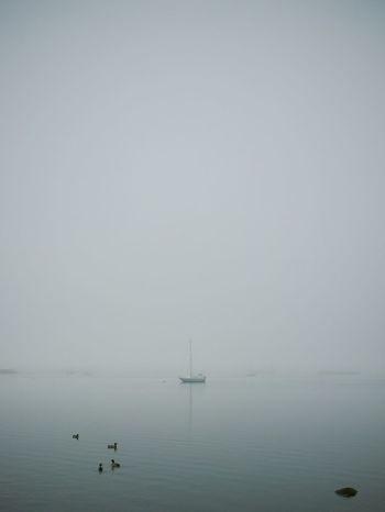 Melancholic Landscapes (yes, I know it's in portrait orientation. I'm a rebel) // EyeEm Best Shots Grryo Fog