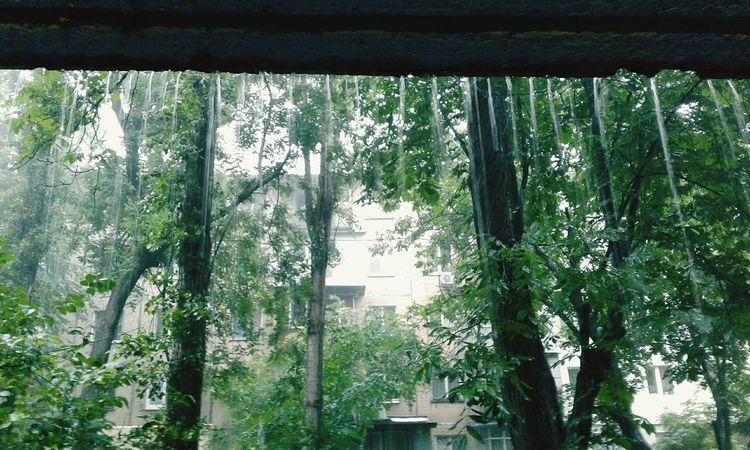 Rain Summerrain