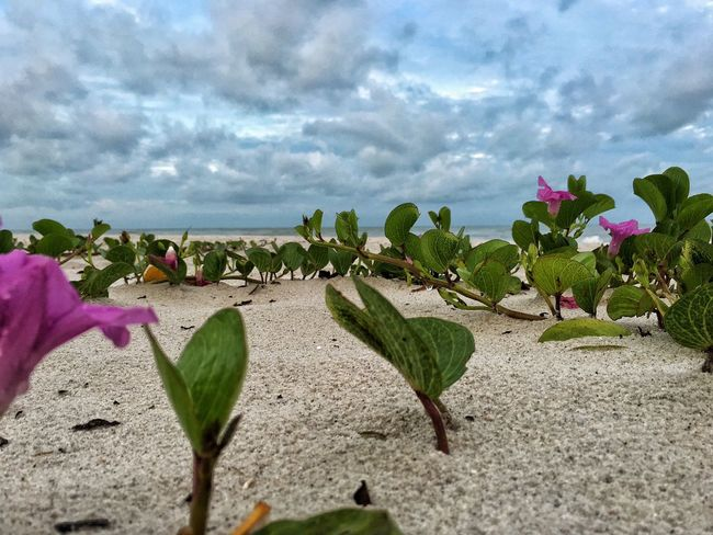 Flower Beauty In Nature Growth Sky Sea Freshness Nature Plant Cloud Fragility Cloud - Sky Tranquil Scene Tranquility Day Petal Cloudy Scenics Green Color No People