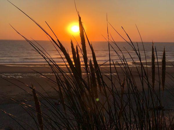 Sunset Sky Sun Beauty In Nature Tranquility Water Plant Sunlight Nature Scenics - Nature Tranquil Scene Orange Color Land Sea Idyllic